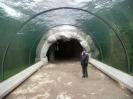 Städte :: Wassertunnel in der Alaskawelt